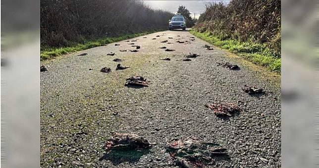 驚見300隻椋鳥集體暴斃!車輾「擠爆臟器」血染整條馬路