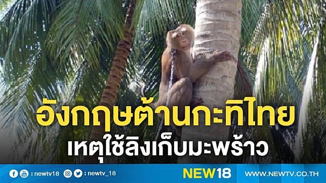 อังกฤษต้านกะทิไทยเหตุใช้ลิงเก็บมะพร้าว