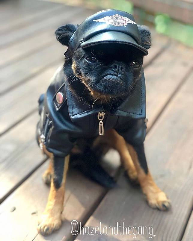 Anjing ini viral berkat wajah songongnya