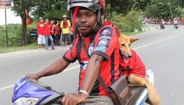 Seorang Persipura Mania mengajak anjing piaraannya dalam arak-arakan dan penjemputan Tim Persipura Jayapura sebagai juara ISL musim 2012-2013 di Kota Jayapura, Papua (7/9). Tempo/ Cunding Levi