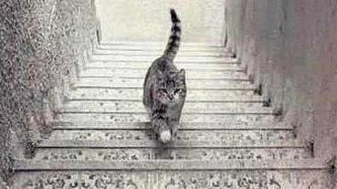 【心理測驗】圖中的貓,正在上樓還是下樓?了解你是樂觀人還是悲觀人