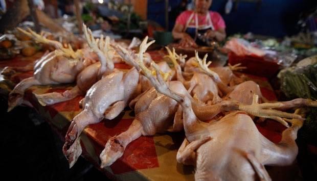 Ilustrasi daging ayam. TEMPO/Aditia Noviansyah