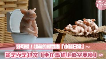 超可愛!!小豬的「耍廢日常」萌翻天~妳是不是也常像這樣蹲在馬桶上放空呢?