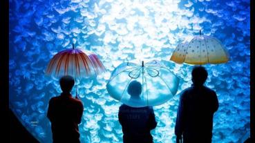 一種透明塑膠雨傘,雖然只能下雨天帶出門,但不小心遺失會想撞牆搥心肝