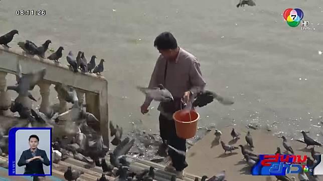 กรมอนามัย เตือนอย่าเข้าใกล้ฝูงนกพิราบ เสี่ยงปอดติดเชื้อ