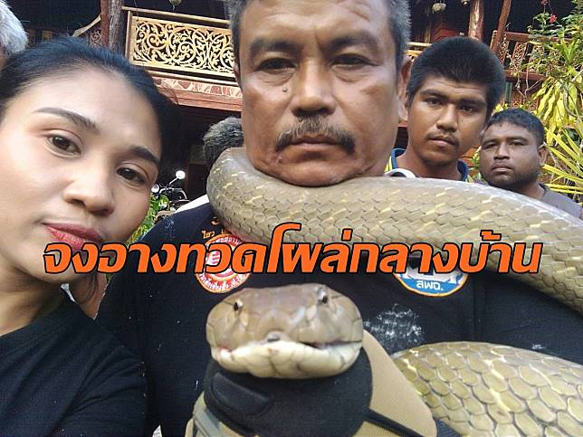 งูจงอาง5