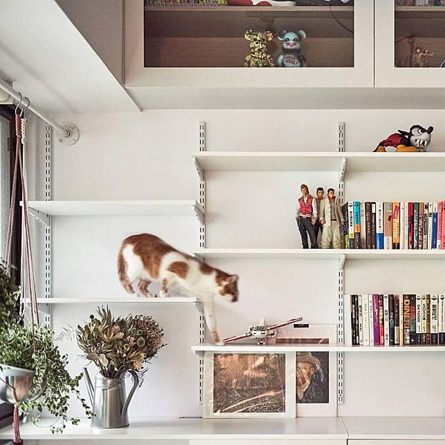 loft-h-st-studio-house-architecture-for-cats_dezeen_1704_col_6