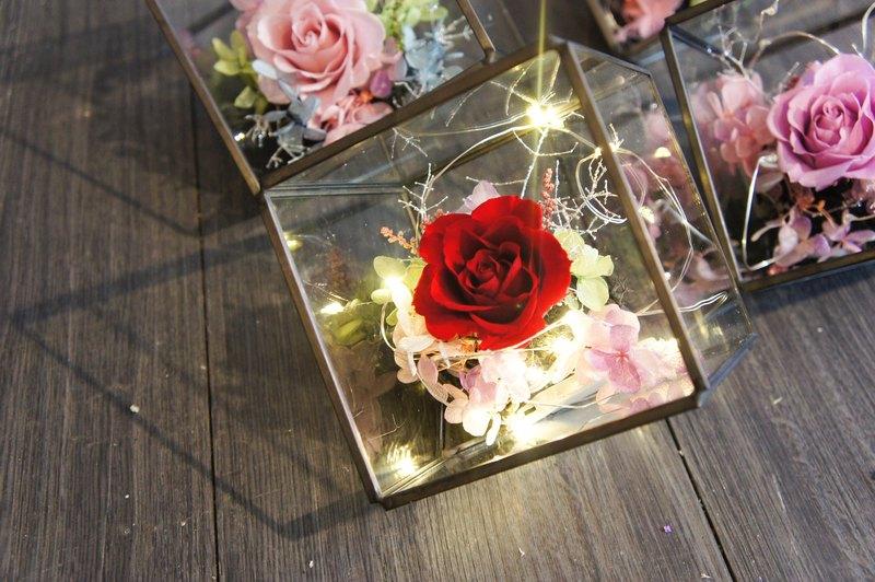 *凡購買皆有禮物圓盒呦!!! *好好愛惜照顧它,可以觀賞3年以上。