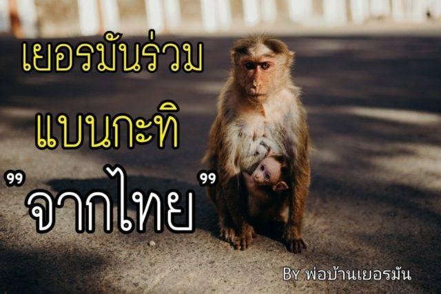 เป็นเรื่อง! เยอรมันร่วมแบน 'กะทิจากไทย' ใช้ลิงเก็บมะพร้าว