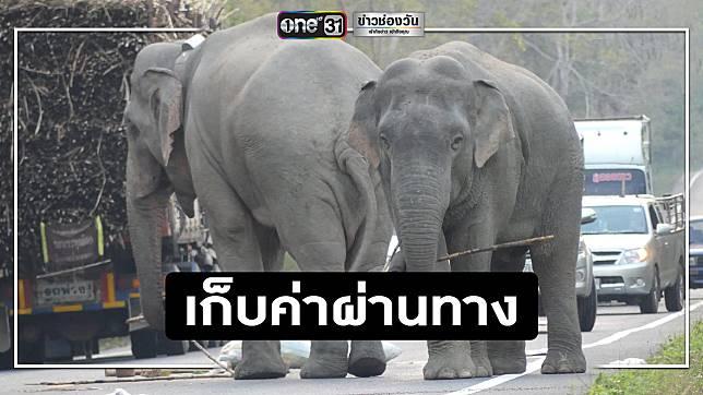 เตือน!ช้างป่า 2 พี่น้องตั้งด่านลอย เน้นรถบรรทุกพืชผล