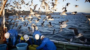 日本漁人(+疑似海鮮美食)節,下個月來了