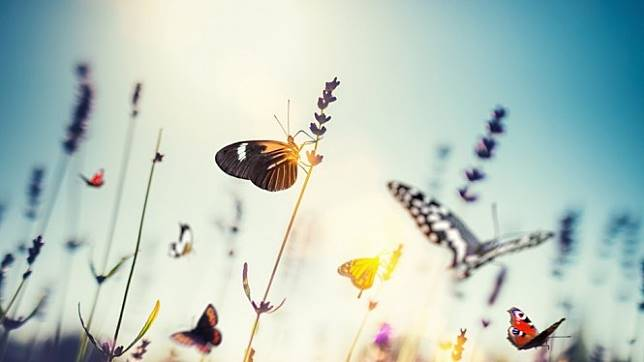 Kecoa dan Lalat Tumbuh Subur, Lebah dan Kupu-kupu Menyusut, Ada Apa?