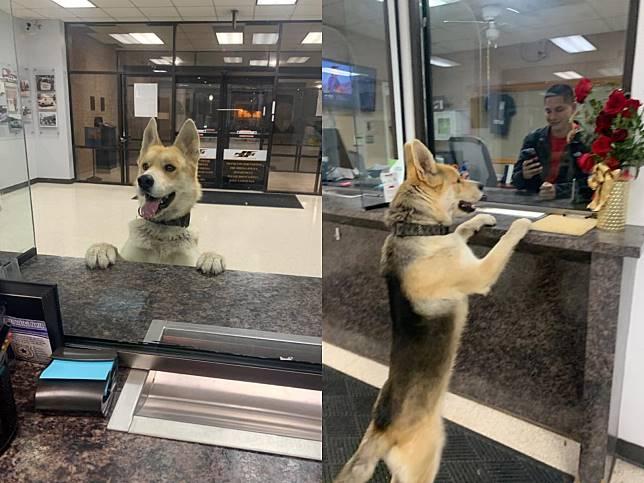 狗狗自主溜進警局 趴在櫃檯大叫報案:警察叔叔我迷路了!