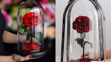 美女與野獸「玫瑰花」真的存在 歐美正流行的火紅玻璃瓶永生花!