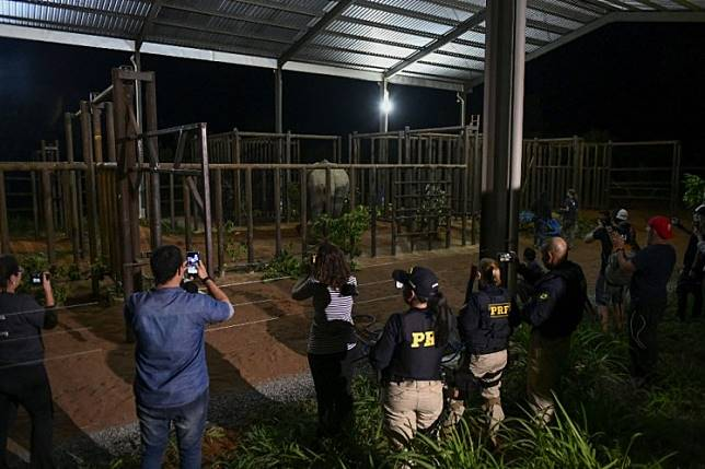 The elephant Ramba is pictured after arriving to the Brazilian Elephant Sanctuary located at the municipality of Chapada dos Guimaraes, Mato Grosso state, Brazil, on October 18, 2019.