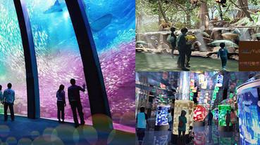 (國內旅遊桃園)【Xpark水族館】日本首座海外分館必去,探討生態生活的都會型水族館,水族公園