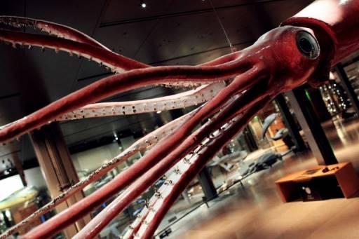 หนึ่งในไฮไลท์ของนิทรรศการคือ หมึกยักษ์ ชื่อ วีค ขนาดยาว 6 เมตร หนัก 80 กิโลกรัม จับได้จากชายฝั่งนิวซีแลนด์เมื่อปี 2000 และจัดแสดงอยู่ก่อนแล้ว THOMAS COEX / AFP