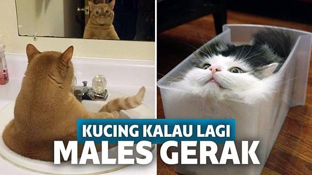 Beginilah 15 Tingkah Lucu Kucing Kalau Lagi Males Gerak