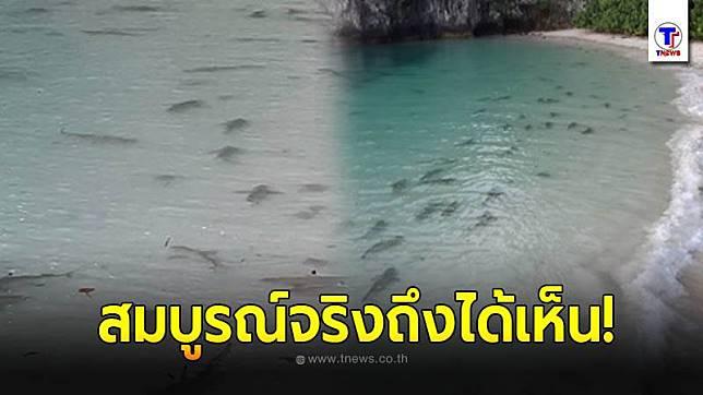 ฝูงฉลามหูดำนับร้อย โผล่แหวกว่ายน้ำตื้นริมชายหาดเกาะห้อง จ.กระบี่