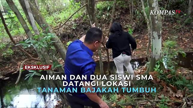 Momen Aiman Witjaksono Telusuri Hutan Lokasi Tanaman Bajakah Tumbuh