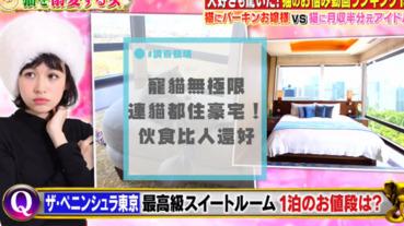 世界上最幸福的貓,放假睡在總統套房,網友們自歎命不如貓!