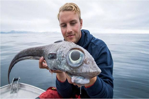 Ikan Purba 'Chimaeras Monstrosa Linnaeus' Tertangkap di Andoya