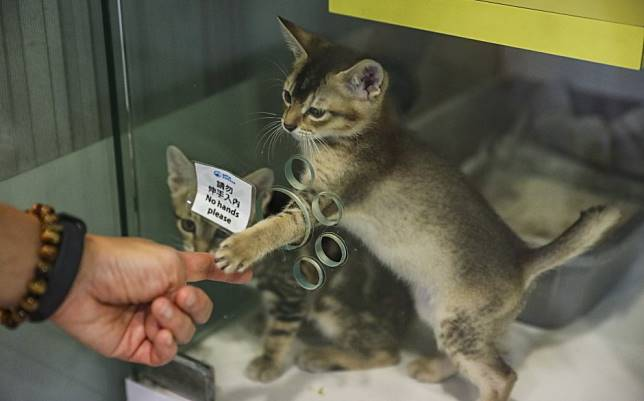 Hong Kong's animal control policy can be better carried out