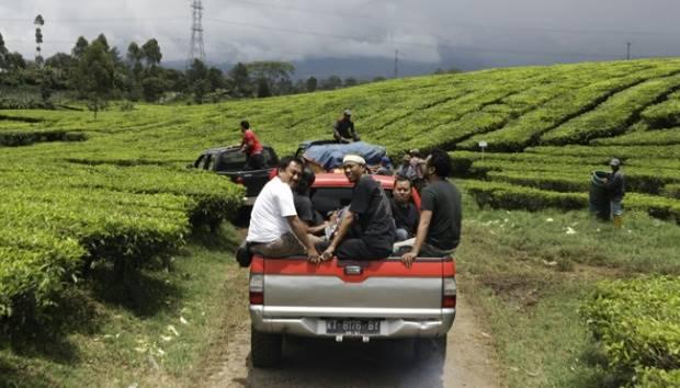 Pengunjung di atas sebuah mobil, melintasi kebun teh saat akan berkunjung ke kebun Kopi Malabar yang terdapat di ketinggian sekitar 1.700 meter di atas permukaan laut, di Desa Margamulya, Pengalengan, Kabupaten Bandung. TEMPO/Hindrawan