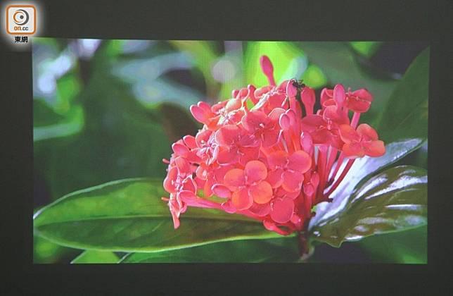 最大可投影出200吋影像,畫面鮮明,味精度不高。(胡振文攝)