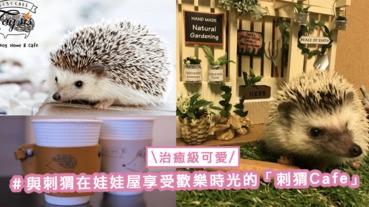治癒級可愛!位於日本澀谷的「刺猬Cafe」,與刺猬在娃娃屋享受歡樂時光〜