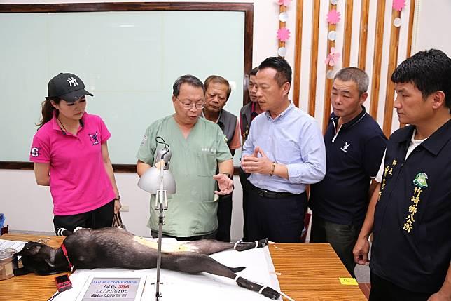 嘉義縣犬貓絕育手術補助,從3月起到11月22日止。