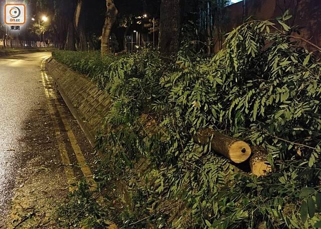 將軍澳有樹塌下,一度阻礙交通。(楊日權攝)