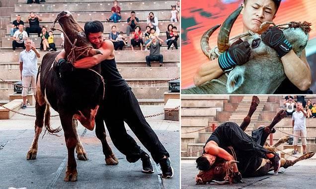 Gulat Brutal Banteng vs Manusia. Image via Reuters