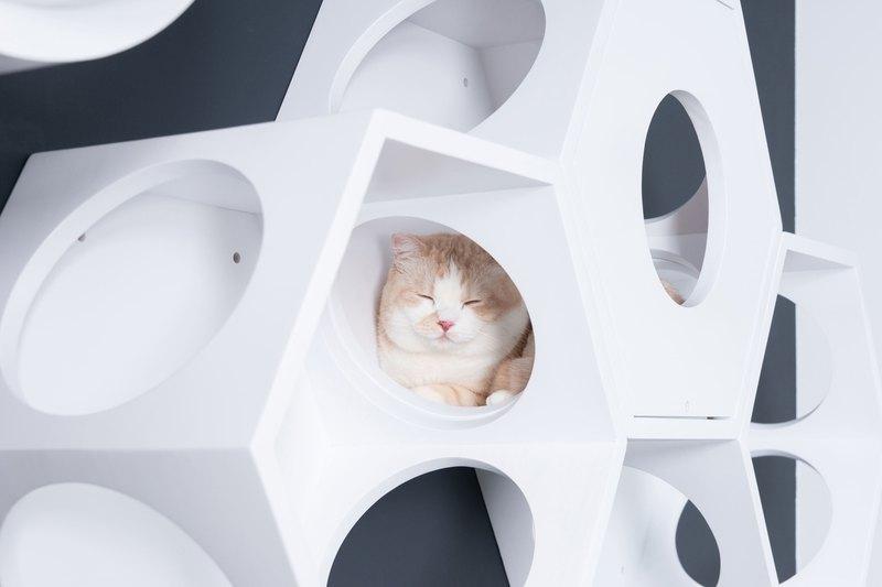 蜂巢式六角貓跳台,可以依照居家的環境,組合排列搭配。
