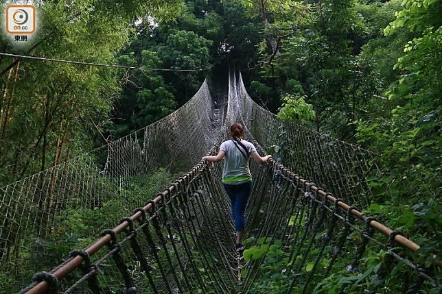 不敢玩空中滑車可選走繩橋,不過搖搖擺擺一樣嚇倒不少細膽者。(劉達衡攝)