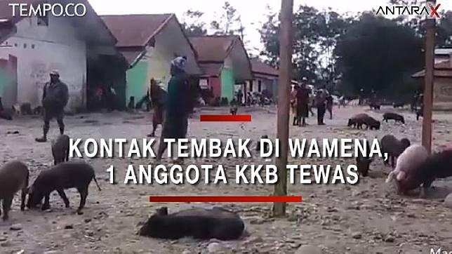 Peristiwa kontak tembak senjata antara kelompok kriminal bersenjata (KKB) dan aparat Polres Jayawijaya terjadi di Pasar Jibama, Wamena, Papua, Jumat (23/8) pagi. ANTARA
