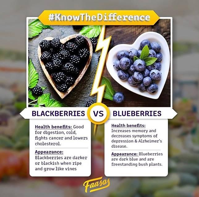 藍莓與黑莓都有食療作用,但功效就明顯不同。(互聯網)