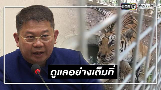 กรมอุทยานฯ แจงเสือโคร่งของกลางวัดหลวงตาบัวตาย เกิดจากปัญหาพันธุกรรม