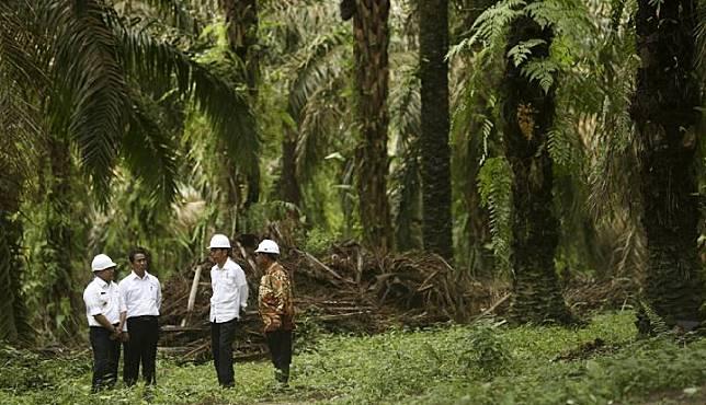 Presiden Joko Widodo (kedua kanan) didampingi Menko Perekonomian Darmin Nasution (kanan), Menteri Pertanian Andi Amran Sulaiman (kedua kiri) dan Bupati Kabupaten Musi Banyuasin Dodi Reza Alex (kiri) berbincang di tengah perkebunan sawit usai launching penanaman perdana program peremajaan kebun kelapa sawit di Desa Panca Tunggal, Sungai Lilin, Kabupaten Musi banyuasin, Sumatera Selatan, 13 Oktober 2017. ANTARA FOTO/Nova Wahyudi