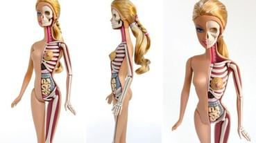 玩具也有內在美?器官透視超有趣!