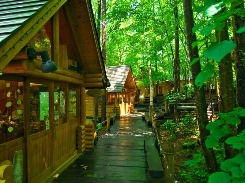 北海道 森林精靈露台