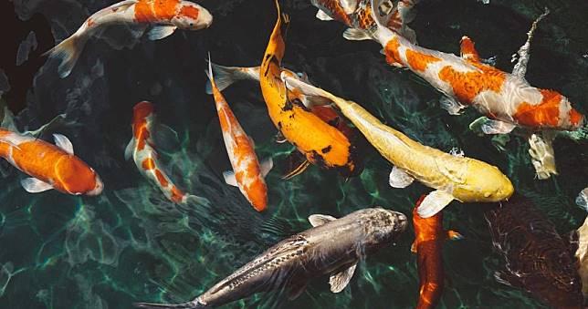 濁水看不清「憑感覺來」 劍橋研究:「雜交」可促進物種進化