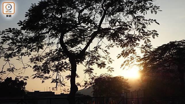 日落西下,形成一幅美景,在更接近大自然的地方度過一天,非常舒服。(馮子伊攝)