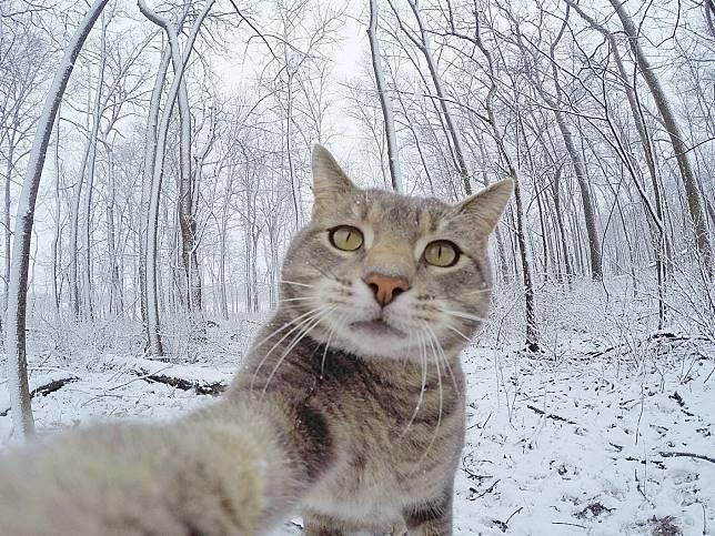 讓專業的來!貓皇超會看鏡頭自拍 還揪貓狗朋友一起玩!