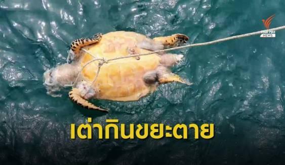 เต่าทะเลกินขยะพลาสติกทยอยตาย