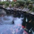 実際訪問したユーザーが直接撮影して投稿した小関町ケーキ佐知S ポケットの写真