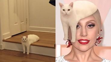 這一張詭異的貓咪姿勢照片 讓美國鄉民再度召開「PS 大賽」!
