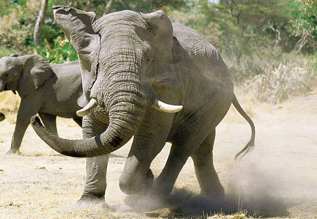 www.africanhunter.online