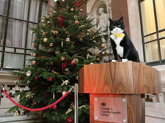 英外交捕鼠官帥氣回歸 死對頭賴瑞暖祝賀:聖誕節我只要你!