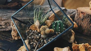 小器植物生活推「植物小行星」空氣鳳梨X多肉植物WORKSHOP!DIY植物生態圈教學添點秋意